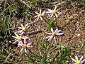 Tienie Versfeld Wildflower Reserve-P9210029.jpg