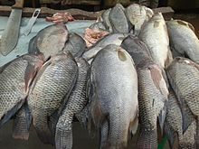 Types of fish in Uganda - Wikiwand