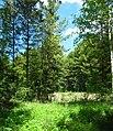 Tomsky District, Tomsk Oblast, Russia - panoramio (82).jpg