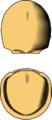Toragnostus bituberculatus draw.png