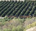 Train in San Timoteo Canyon, Redlands, CA 3-2012 (6836331882).jpg