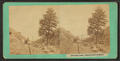 Tree, Weber Canon, 1000 miles - west of Omaha, by C. W. Carter.png