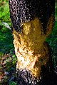 Tree Damaged by Beavers (Grant County, Oregon scenic images) (graDA0020).jpg