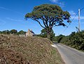 Tree on lane just west of Modbury - geograph.org.uk - 238494.jpg