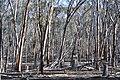 Tree vista, Dryandra Woodland, Western Australia.jpg