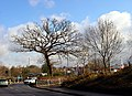 Trees and Roundabout by Tesco Eastgate centre - geograph.org.uk - 126939.jpg