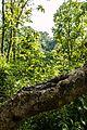 Trees of jangle-hill.jpg