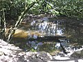 Tributary of the River Allen in St Clement Woods - geograph.org.uk - 912735.jpg