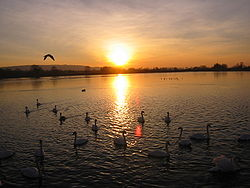 In the foreground is a large reservoir, with several swans visible. Trees can be seen in the distance. There are clouds in the sky. The sun is shining brightly. Its yellow light reflects across the water.