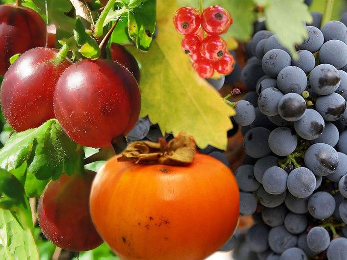 True.berries.jpg