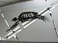Turtle fossil, Royal Ontario Museum (6222387110).jpg