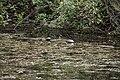Turtles (3681475054).jpg