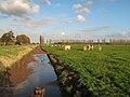 Tussen Roelofarendsveen en Hoogmade, panorama2 van de polder foto2 2009-10-25 16.18.JPG