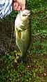 Twin Lakes State Park Bass (13750854963).jpg