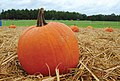 US Army 52698 Fall fun ripe for the picking.jpg