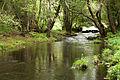 Umia River by Caldas de Reis, Galicia, Spain-4.jpg