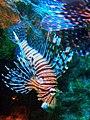 Unknown fish 4.jpg