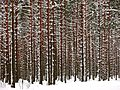 Unnamed Road, Sējas novads, LV-2142, Latvia - panoramio (4).jpg