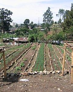 Urban gardens (5762524159).jpg