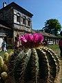 Výstava kaktusov v areáli hradu.jpg