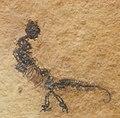 Vallesaurus cenensis.JPG