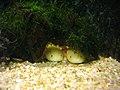 Vannes - aquarium (21).jpg