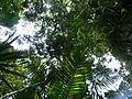 Vegetación de la Reserva de la Biosfera La Amistad Panama (RBLAP) 22.JPG