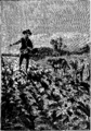 Verne - P'tit-bonhomme, Hetzel, 1906, Ill. page 188.png