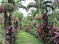 Very tropical corridor (7189101709).jpg