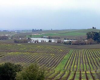 Los Carneros AVA - Vineyards in the Sonoma section of Los Carneros