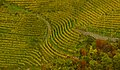 Vineyards in Chiusa, Italy.jpg