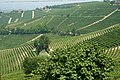Vineyards of Piedmont.jpg
