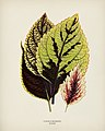 Vintage illustrations by Benjamin Fawcett for Shirley Hibberd digitally enhanced by rawpixel 88.jpg