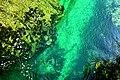 Vintgar Gorge (34972743734).jpg