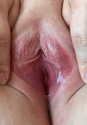 Vagina Gespreizt