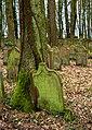 Waibstadt - Jüdischer Friedhof - alter Teil - eingewachsener Grabstein 1.jpg