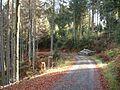 Wandern im November in Todtmoos - panoramio (7).jpg