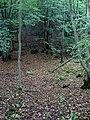 West Wood - geograph.org.uk - 1530501.jpg
