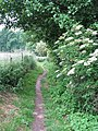 Wherryman's Way - narrow path to the River Yare - geograph.org.uk - 1358346.jpg