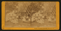 White Sulphur Springs, Napa Co. Cal, by J. G. Brayton.png