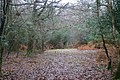 Whitley Wood - geograph.org.uk - 1124708.jpg