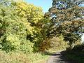 Why it's called Woodside - geograph.org.uk - 581298.jpg