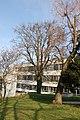 Wiener Naturdenkmal 68 - Baumhasel (Döbling) 3.JPG