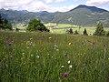 Wiesmahdhänge bei Unterammergau Foto M.Kandler 2017-06-18.jpg
