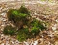 Wijnjeterper Schar, Natura 2000-gebied provincie Friesland 008.jpg