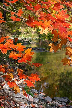 Wilket Creek in the fall