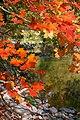 Wilket Creek in the autumn (1).jpg