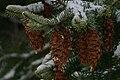 Winter in Western Oregon (23922415426).jpg