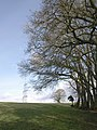 Wood edge near Crosses Leigh - geograph.org.uk - 1713553.jpg