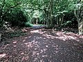 Woodland path in Gernon Bushes Nature Reserve, Theydon Garnon, Essex 03.jpg